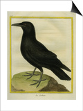 Common Raven Prints by Georges-Louis Buffon