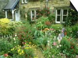 Cottage Garden With, Colourful Flower Beds Direlton, Scotland, UK Prints by Mark Hamblin