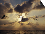 Seagulls, Sunrise, Atlantic Shore Prints by Jeff Greenberg