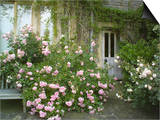 Rosa, Pink Flowers Divided by a Path and Wooden Door and Spreading Over a Bench, Worcester Posters by Mark Bolton