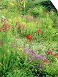 Wild Garden Pond Poster by Mark Bolton