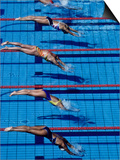 Female Swimmers at the Start of a Race Prints