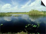 Everglades, Florida Prints by David Tipling