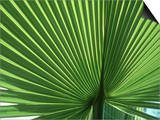 Palm Leaf, Scotland Art by Iain Sarjeant