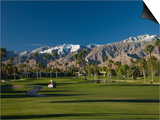 Palm Trees in a Golf Course, Desert Princess Country Club, Palm Springs, California Prints