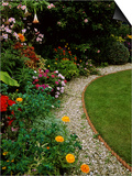 Close-up of Colourful Planting of Annuals and Half Hardy Exotics, Alongside Gravel Path Prints by Mark Bolton