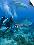Caribbean Reef Shark (Carcharhinus Perezii) Swimming with Divers, Roatan, Bay Islands, Honduras Prints by Antonio Busiello