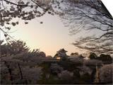 Sunset, Cherry Blossom, Kanazawa Castle, Kanazawa City, Ishigawa Prefecture, Honshu Island, Japan Art by Christian Kober
