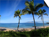Palm Trees on the Beach, Maui, Hawaii, USA Posters by  Panoramic Images