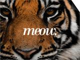 Meow Reprodukcje autor Thorsten Milse