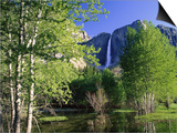 Yosemite Falls, Spring Time, CA Posters by Inga Spence
