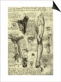 Human Anatomy Poster by  Leonardo da Vinci