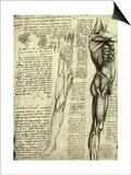 Da Vinci's Man Machine Posters by  Leonardo da Vinci