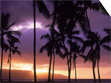 Silhouette of Palm Trees, Hawaii Print by Mitch Diamond