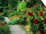 Gravel Path Meandering Through Hot Border with Planting of Spiky Red Dahlias Posters by Mark Bolton