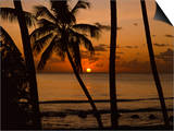 Beach at Sunset, Barbados, West Indies, Caribbean, Central America Poster by Harding Robert