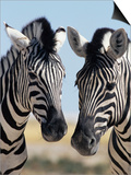 Two Burchell's Zebra, Equus Burchelli, Etosha National Park, Namibia, Africa Poster by Ann & Steve Toon