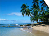 Beach, Barbados, West Indies, Caribbean, Central America Prints by Harding Robert