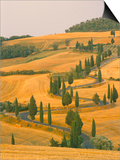 Cypress Trees Along Rural Road Near Pienza, Val D'Orica, Siena Province, Tuscany, Italy, Europe Art by Sergio Pitamitz