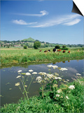 River Brue with Glastonbury Tor in the Distance, Somerset, England, United Kingdom Posters by Chris Nicholson