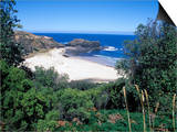 View Over Trees to Trbeach and Bushranger Bay, Mornington Peninsula, Victoria, Australia Prints by Richard Nebesky