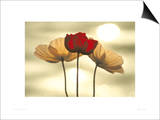Icelandic Poppies Prints by Yoshizo Kawasaki