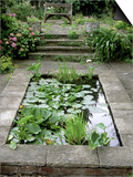 Small Formal Pond with Aquatic Planting Art by Mark Bolton