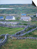 Inishmore, Aran Islands, County Galway, Connacht, Eire (Republic of Ireland) Prints by David Lomax
