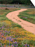 Dirt Road with Wildflowers, Texas Prints by David Davis