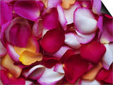 Rose Petals Posters by David Tipling