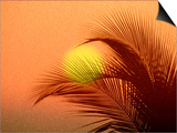 Palm Tree and Sunset Poster by Jerry Koontz