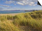 Sand Dunes and Dune Grasses of Mellon Udrigle Beach, Wester Ross, North West Scotland Prints by Neale Clarke