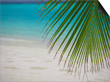 Palm Tree Leaf and Tropical Beach, Maldives, Indian Ocean Prints by Papadopoulos Sakis