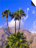 Palm Trees with San Jacinto Peak in Background, Palm Springs, California, USA Prints by DeFreitas Michael