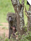 Olive Baboon Mother and Infant, Serengeti National Park, Tanzania Posters by James Hager