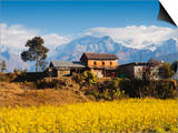 Mustard Fields with the Annapurna Range of the Himalayas in the Background, Gandaki, Nepal, Asia Posters by Mark Chivers