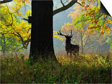 Deer, Favorite Park, Ludwigsburg, Baden-Wurttemberg, Germany, Europe Prints by Jochen Schlenker