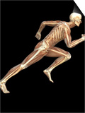 Skeleton Sprinting Prints by Roger Harris