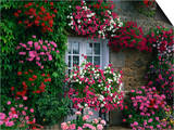 Farmhouse Window Surrounded by Flowers, Ille-et-Vilaine, Brittany, France, Europe Posters by Tomlinson Ruth