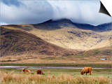 Highland Cattle, Ben More in the Distance, Isle of Mull, Scotland, United Kingdom, Europe Art by Patrick Dieudonne