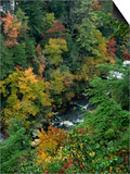 Linville Gorge and Autumnal Forest Canopy, Blue Ridge Parkway, North Carolina, USA Prints by James Green