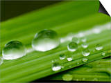 Water Droplets on Grass, Dali, Yunnan, China Prints by Porteous Rod