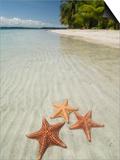 Starfish Beach, Bocas Del Drago, Isla Colon, Bocas Del Toro, Panama, Central America Prints