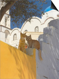 Cats in Akrotiri, Santorini, Cyclades, Greek Islands, Greece, Europe Poster by Papadopoulos Sakis