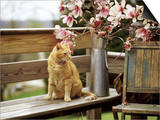 Close-up of Alert Ginger Cat, on Wooden Bench, with Twigs of Flowering Magnolia in Metal Jug Posters by Erika Craddock