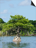 Young Cyprus Tree, Everglades, UNESCO World Heritage Site, Florida, USA, North America Art by Michael DeFreitas