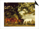 Green Pastures Posters by George Stubbs