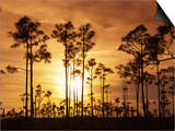 Everglades National Park, UNESCO World Heritage Site, Florida, USA, North America Posters by Angelo Cavalli