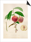 The Red Magdalene peach Prints by William Hooker