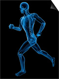 Running Skeleton, Artwork Art by  SCIEPRO